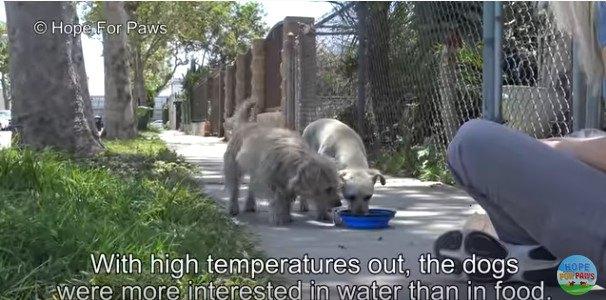 他の犬たちにいじめられていた小型犬2匹を保護。トラウマになってない?