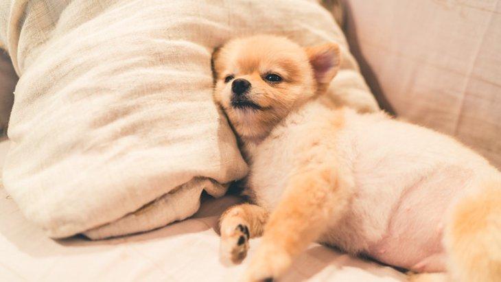 犬のクーラー病(冷房病)に注意!症状と対策