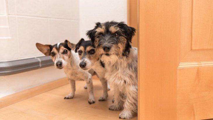 犬が飼い主のトイレやお風呂をチラっと覗きに来る心理5選