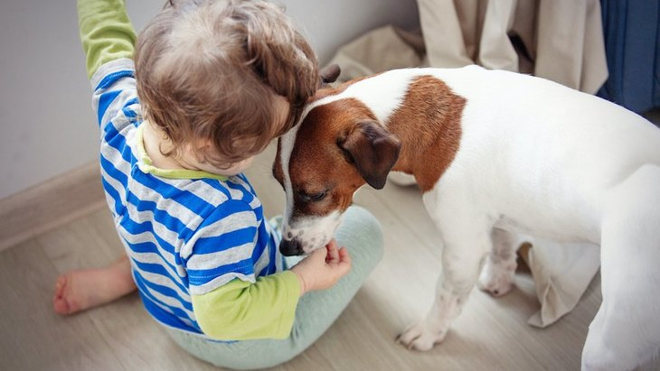 犬と赤ちゃんがいる家庭でするべきではないNG行為5選