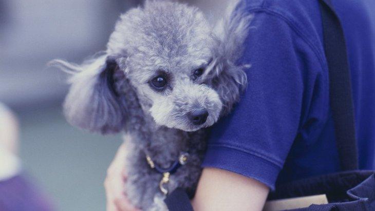 その愛情表現は正しいですか?犬にやりがちなNG愛情表現4つ
