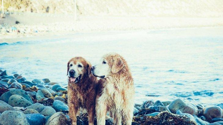お散歩コースがいつも同じだと、犬は認知症になりやすい?