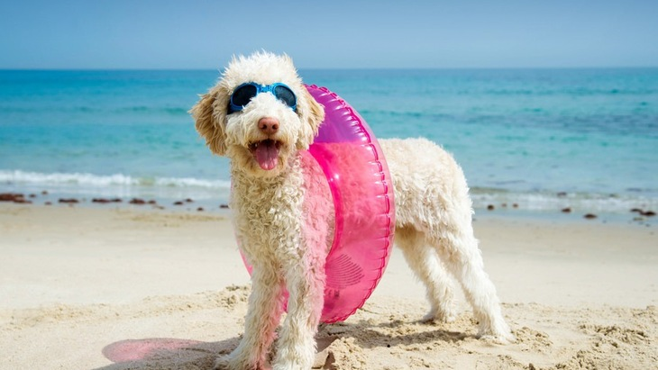犬と夏のお散歩に出る時の3つの注意点