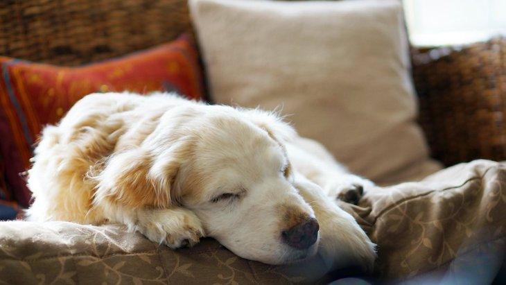 眠る時間の増えた高齢犬、年のせいだけではない可能性に要注意!