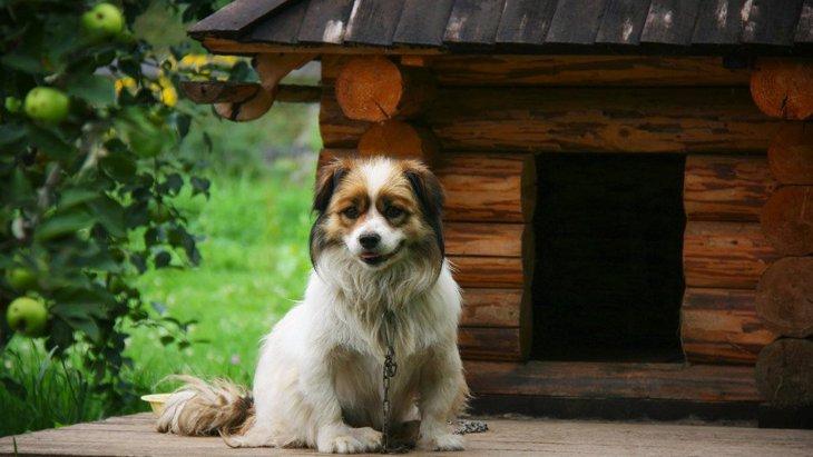 ご近所トラブルを起こさないために!犬の飼い主ができる対策5つ