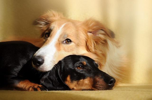 シニア犬がいる家庭に子犬を迎えることの問題点