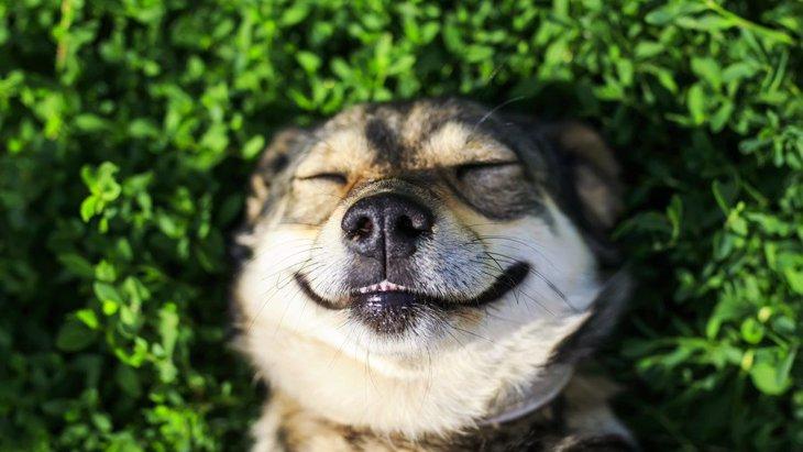 あなたの愛犬はどう?犬が満足している時の仕草や行動6つ