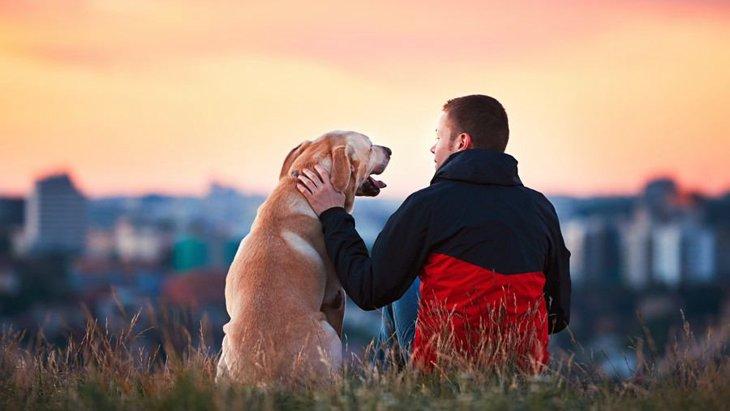 飼い主がストレスを抱えることにより、愛犬も病気になる?