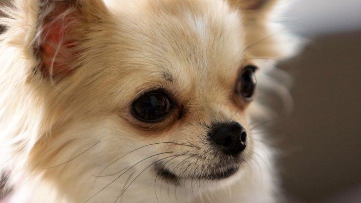 保健所から犬を迎えるという選択について