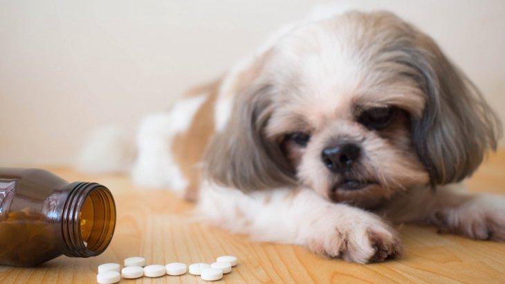 犬が人間の薬を誤飲してしまうとどうなる?対処法まで
