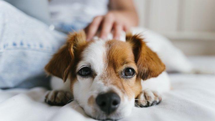 犬が飼い主と久しぶりに会った時に見せる仕草5つ