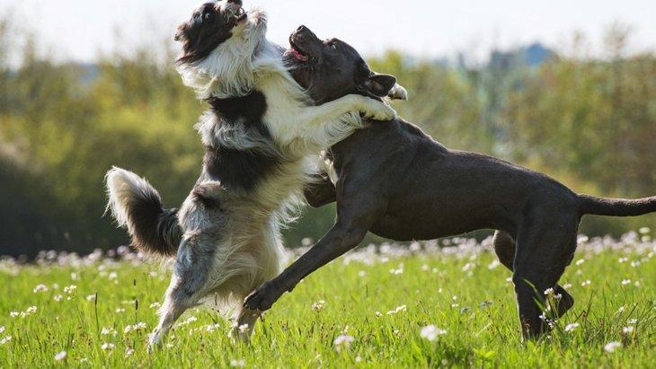 犬友同士でありがちなトラブル5選