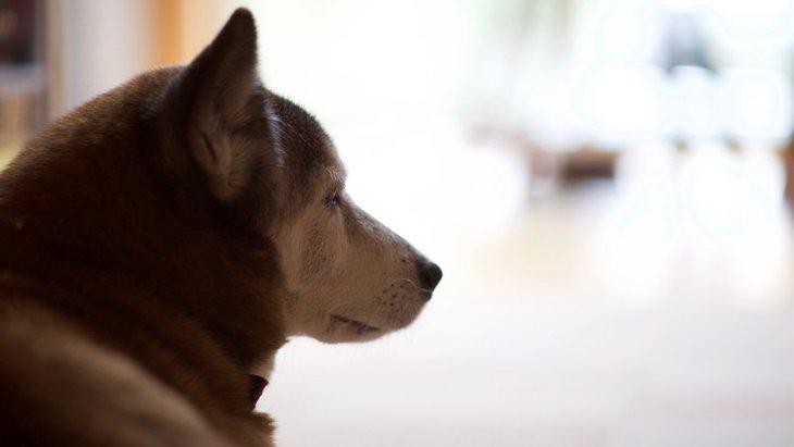 老犬との生活で大切な3つのこと