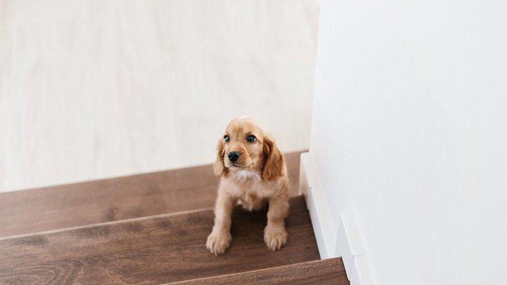 犬の運動として『階段の上り下り』をさせてはいけない理由3つと対応策