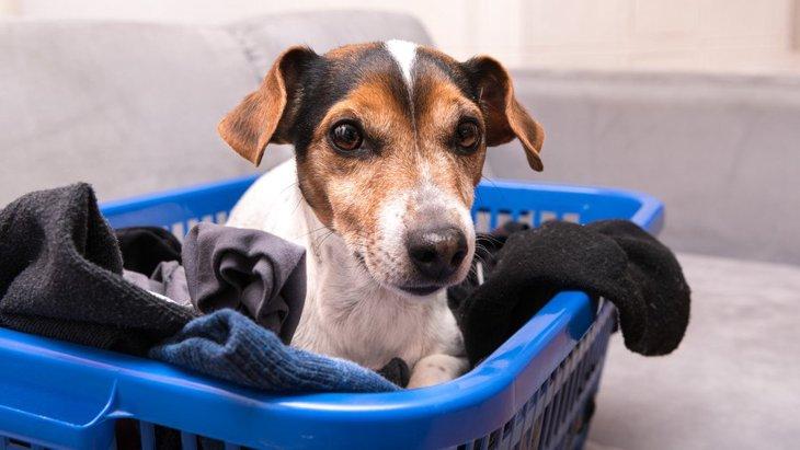 犬が『靴下好き』なのはなぜ?3つの理由と注意すべきこと