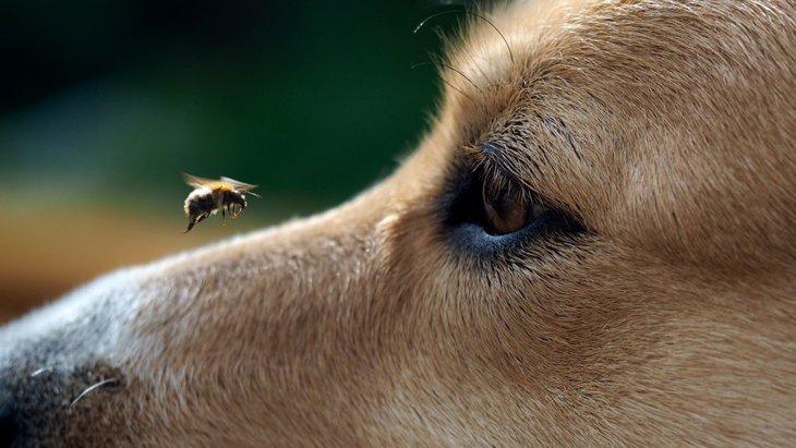 秋は特に注意!愛犬がスズメバチに刺された時の対処法