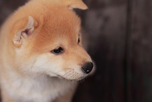 愛犬が早死にする可能性も…今すぐにやめたい5つの飼い方