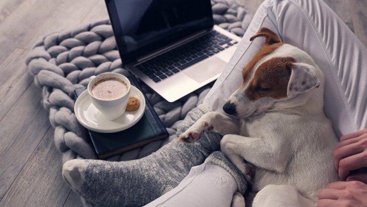 カワイイ♡犬が飼い主に『くっつく』時の心理5つ
