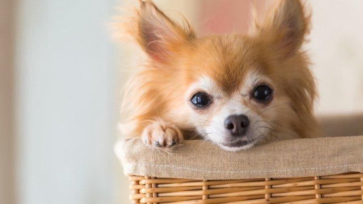 一人暮らしで犬を飼うのにオススメの犬種4選!飼い方や注意点など