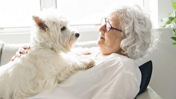 犬が『飼い主にもたれかかる』時の心理7選