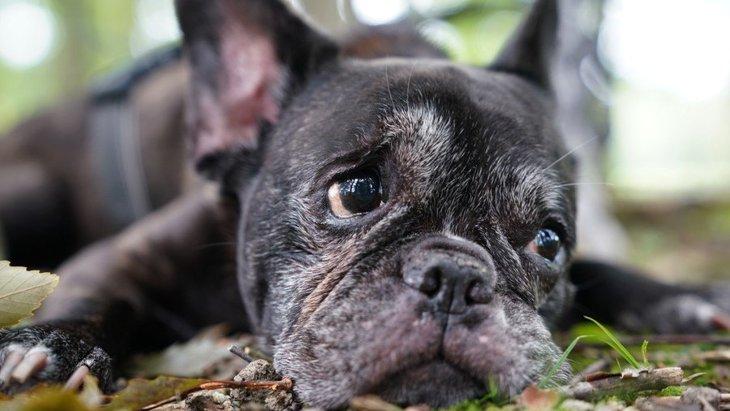犬が亡くなる直前、飼い主を避けようとする心理4つ