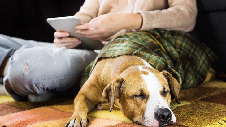 犬が飼い主の近くで寝る心理3選!その場所によっても意味が異なるって知ってた?