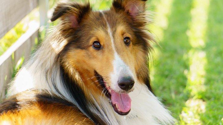 犬の立ち耳や垂れ耳、多様な耳の形について