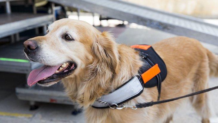 アメリカの航空会社が介助犬とのフライトの無料訓練体験を実施
