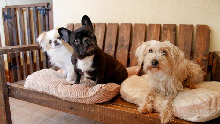 多頭飼いには向いていない3つの犬の性格