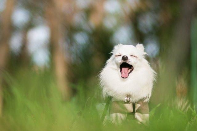 犬が「オスワリ」のまま寝る時の心理3つ