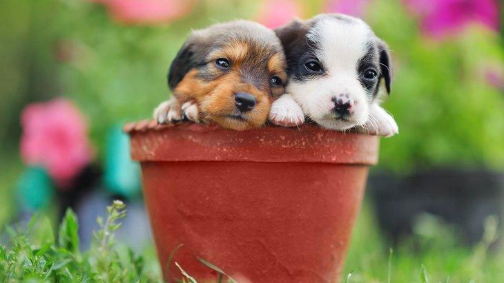 犬の飼い主が絶対に育ててはいけない『観葉植物』7選