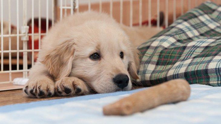 犬を迎えるオススメの時期はいつ?注意点から準備するものまで