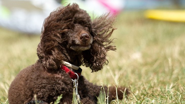 風が強い日、犬の散歩に行くのは危険?考えられるリスク3選