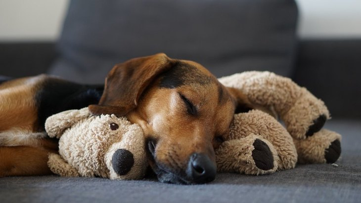 犬が柔らかいものをモミモミする理由4つ