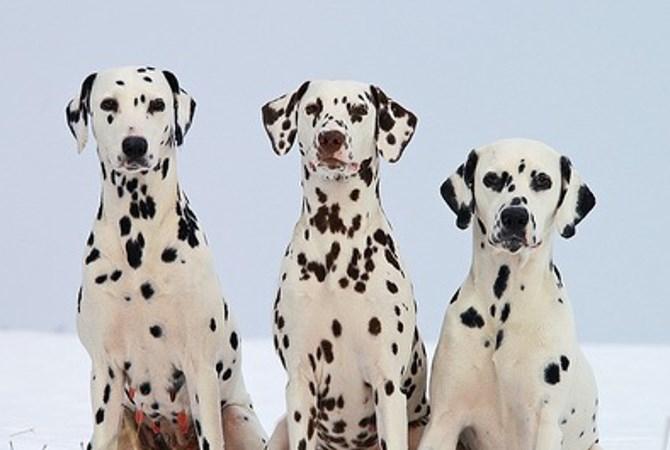 犬猫の多頭飼いの届け出がついに義務化!?