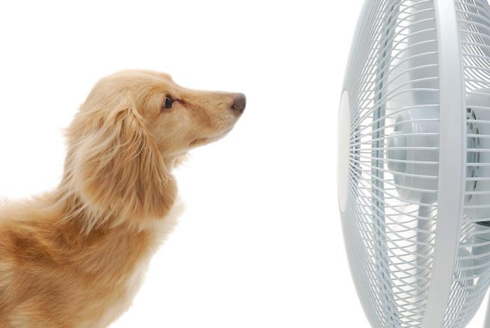 お金をかけない愛犬の夏対策~我が家の場合~