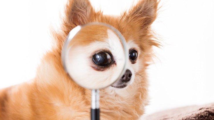 犬は『飼い主の表情』で感情を読み取っている?