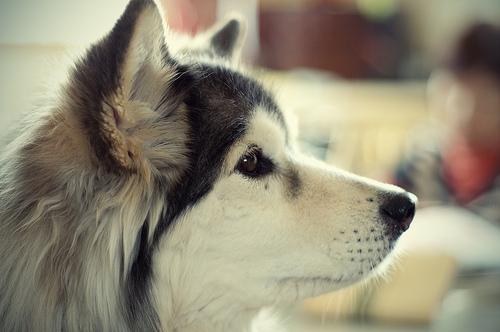 犬のしゃっくりの原因と止め方を知ろう!考えられる病気と危険性