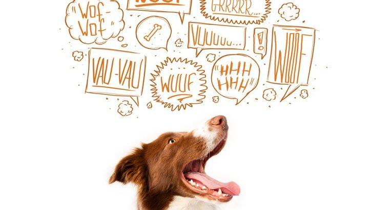 犬が飼い主の帰宅時に吠えるときの心理3つ