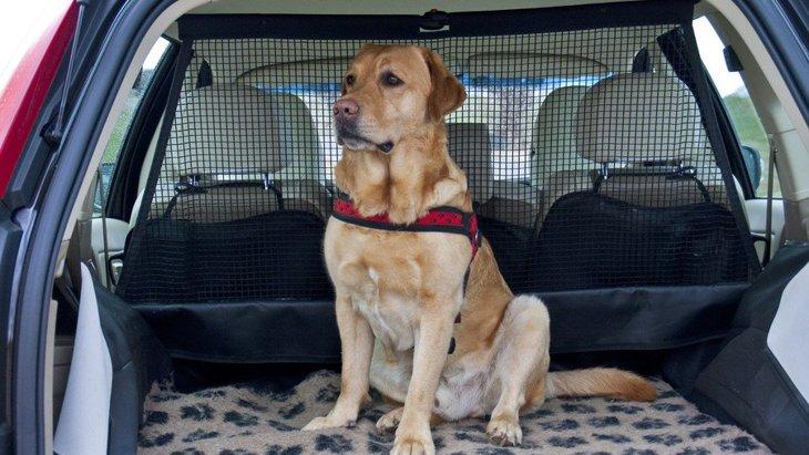 犬が車の中で落ち着かない理由と対処法