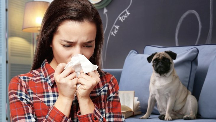 『犬アレルギー』の主な症状!原因から対処法まで