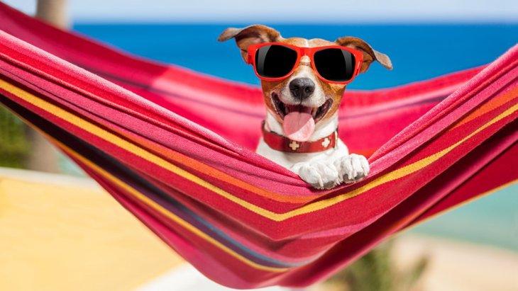 おすすめの犬用ハンモック6選!これで愛犬もリゾート気分?