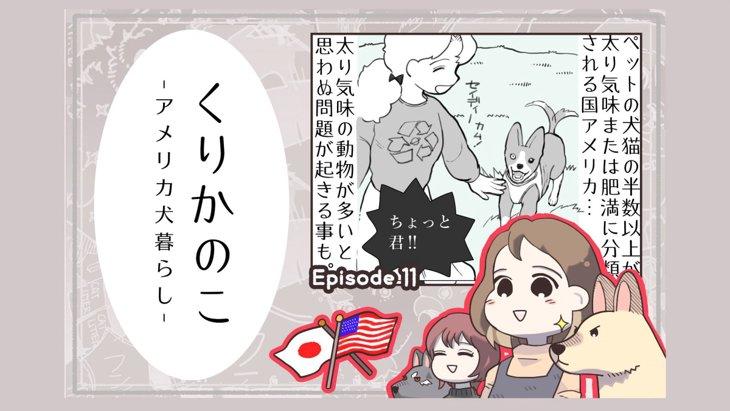 くりかのこ アメリカ犬暮らし【第11話】「思わぬ問題」