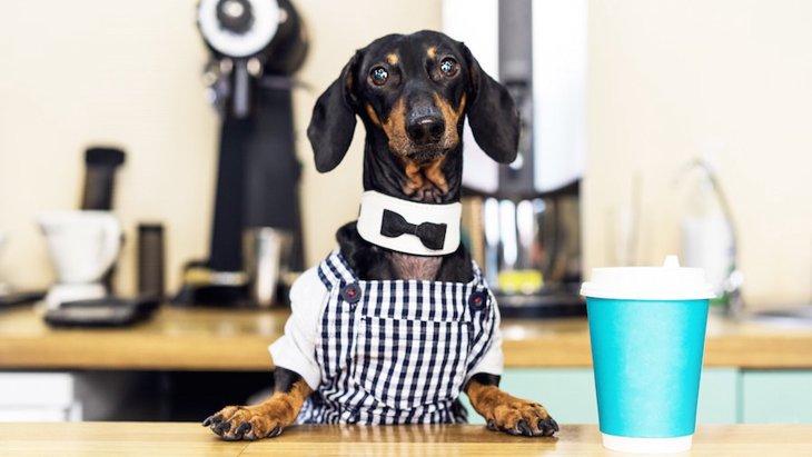 犬カフェってどんなところ?ドックカフェとの違いとは?