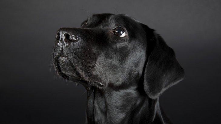 犬の鼻がいつも濡れている理由とは?乾いているときの注意点まで