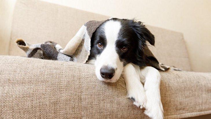 犬が動物病院を嫌がっている時に見せる行動5選!どうしても動かない時の対処法は?