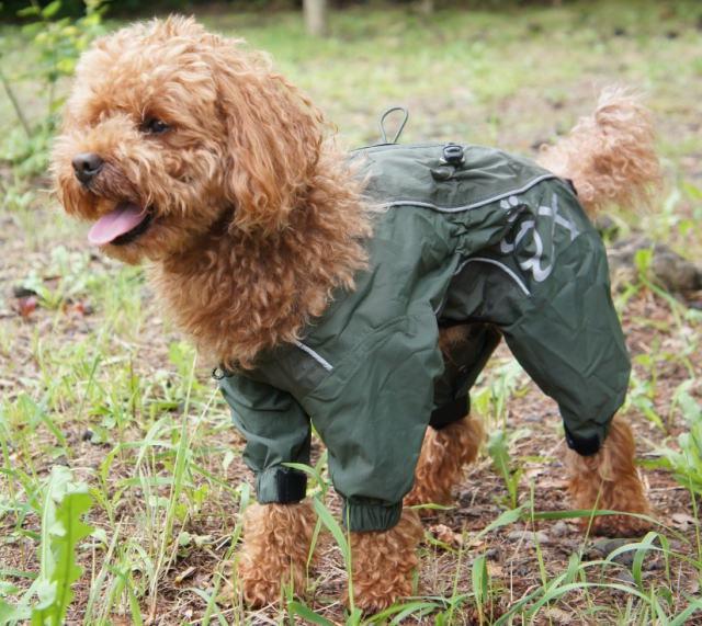 愛犬のレインコートおすすめ商品と活用