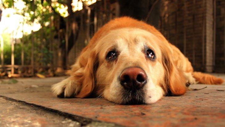 犬が『悲しい気持ち』になっている時にする仕草や行動3選
