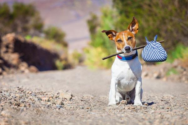 犬をGPSで追跡!「もしも」の備えに