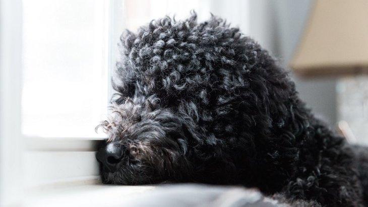 研究中の犬の脳腫瘍治療薬が、将来的に人間にも有効な可能性が!